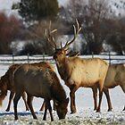 The Elk by Gene Praag