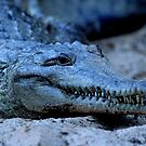 Freshwater Crocodile by naturalnomad