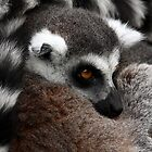 Lemur Look by Mark Hughes