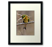 Little Bee Eater Framed Print