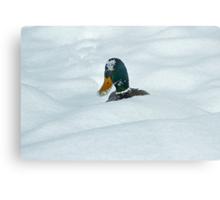 The Savage Canadian Snow Duck Metal Print