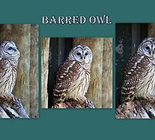 Barred Owl ~ Collage by AuntDot