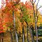 THE AUTUMN COLORS- $ 20.00 USD voucher for FEB