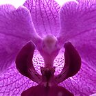 Bird face in Purple Orchid by hummingbirds