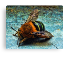 """Bumble Bee"" Canvas Print"