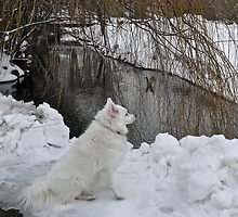 Sylvie Senses Something - A Fowl - Down By the River by Jack McCabe