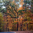 Gorgeous Colors of Fall by BCallahan