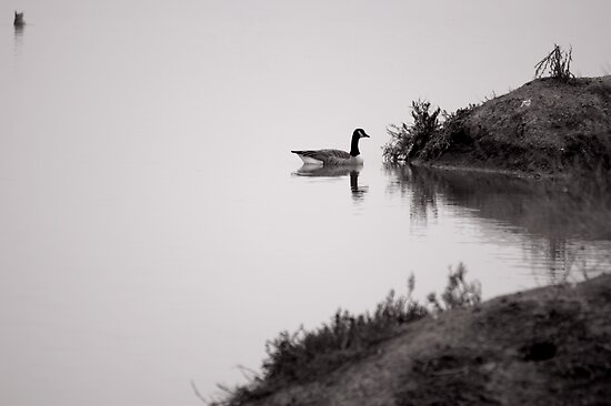 Foggy Calm by Bob Wall