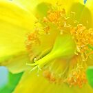 Brugges Yellow Flower by DanielleMarie1