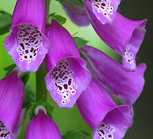 Pretty in purple - Backyard beauty by Jeff Weymier