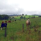 The Rolling Green Hills of Dorrigo by Michael Matthews