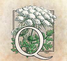 Q is for Queen Anne's Lace  by Stephanie Smith