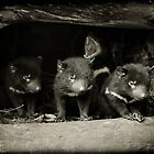 Little Devils by Andrew Wilson