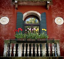 Window, Venezia by pmreed