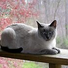 Lacy Girl by CarolD