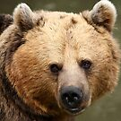 Brown Bear by Mark Hughes