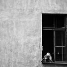 window by Jacek Nazim