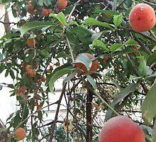 Ripe Peaches on Tree by Adam Isaacson