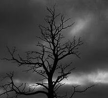Drama Tree  by brimo
