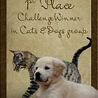 cats and dogs group banner by thinkingoutloud