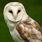 Beautiful Barn Owl by Mark Hughes