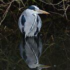 Heron and reflection by Richard Bowler