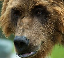 Grizzly mood by Luann wilslef