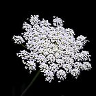 Cow Parsley by Karen Martin IPA