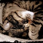 Sleeping Tabby by Karen Martin