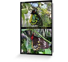 Butterfly (Australia) ~ Cairns Birdwing  ♂ & ♀ Greeting Card