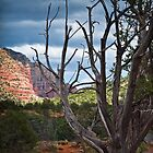 Arizona Desert Tree by Michi Fana