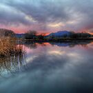 Swamp Dream by Bob Larson