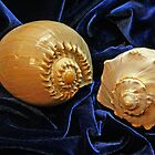 Shell Duo by Lynda Lehmann