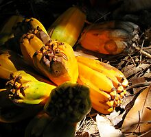 fallen pandanus fruit by allespostcards