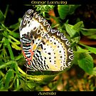 Butterfly (Australia) ~ Orange Lacewing by Kimberly Chadwick
