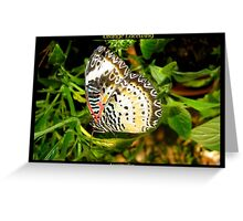 Butterfly (Australia) ~ Orange Lacewing Greeting Card