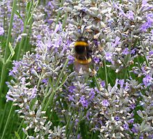 Busy at Work by DEB CAMERON