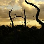 sunset in kruger by petraE