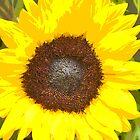 Sunflower by HEIDI  HORVATH