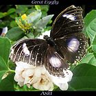 Butterfly (Asia) ~ Great Eggfly by Kimberly P-Chadwick