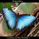 Butterflies ~ Colors of the World! by Kimberly Chadwick