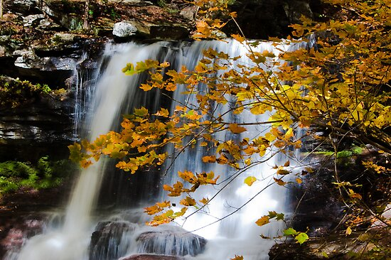 Autumn in Ricketts Glen 4.0 by Murph2010