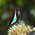 Blue triangle butterfly by Daphne Gonzalvez