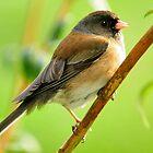 BIRD ON A BRANCH by RoseMarie747