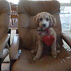 Buddy Is Ready For Valentine's Day by joycee
