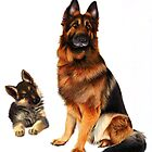 German Shepherds by Karen  Hull