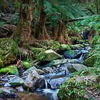 Sherbrooke Creek, Dandenong Ranges National Park by John Bullen