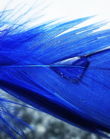 Blue droplet by MichelleRees