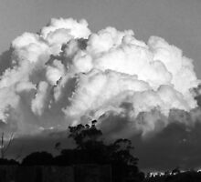 Over the Back Fence, Black and White Lilydale, Tasmania by RainbowWomanTas
