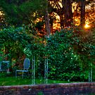 Sunset Over the Garden by Monica M. Scanlan